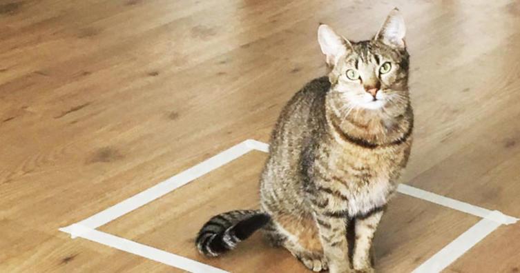 Dieser Katzen-Trick sorgt für großen Wirbel im Internet.