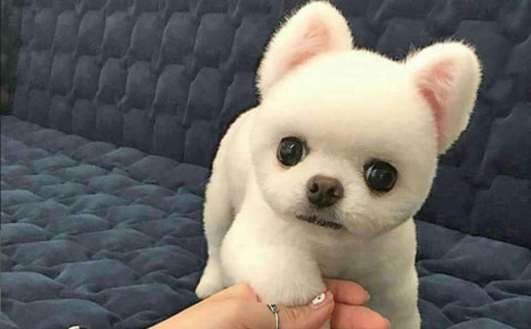 Weibliche Hundenamen Top 10