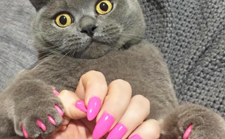 Wir sind geschockt! Es gibt künstliche Krallen für Katzen und das ist der Grund