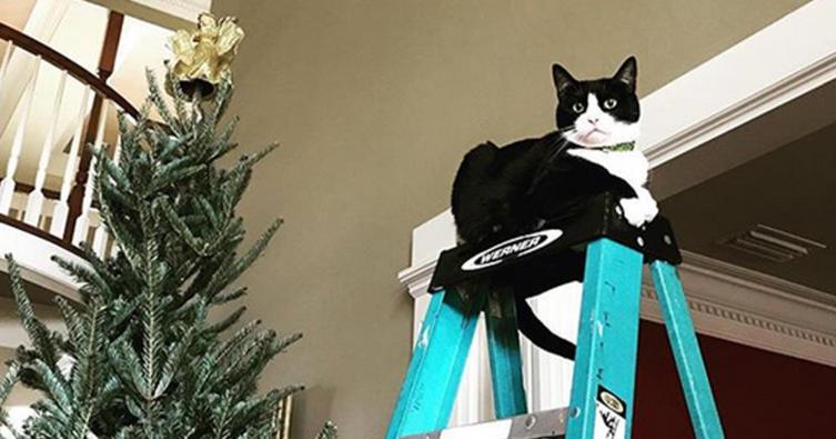 Die 10 schönsten Weihnachtsbilder mit Katze