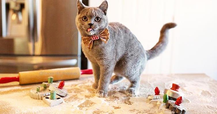Katzenplätzchen backen ist ganz einfach!