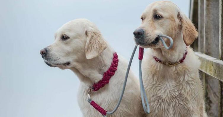 Die 10 stylischsten Halsbänder für Hunde