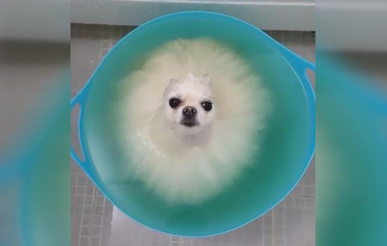 Habt ihr schon ein so flauschiges Hundebad gesehen?