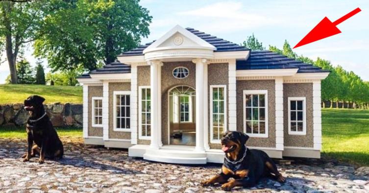 Gesucht: Luxusvilla mit Pool für seriösen Hund