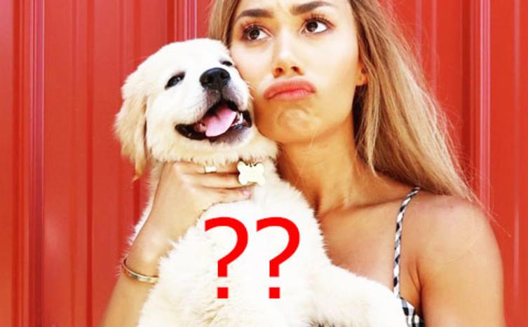 Welche Hunderasse passt zu deinem Sternzeichen?