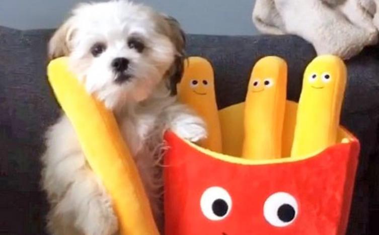 Dieser Hund hat einen ganz besonderen besten Freund!