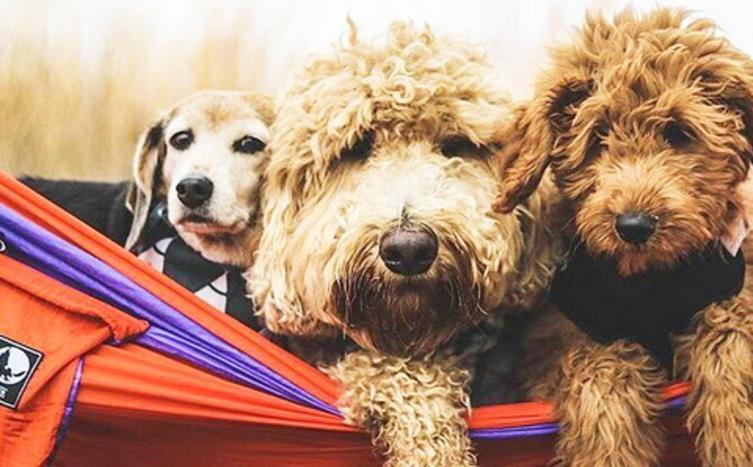 10 Life-Hacks die jeder Hundebesitzer kennen sollte!