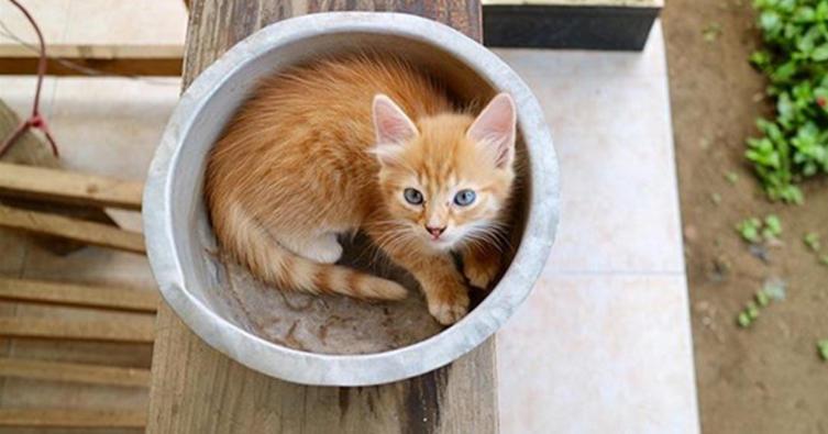 Das sind die 10 niedlichsten Katzen im Blumentopf