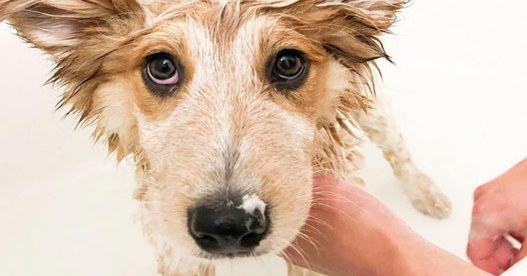 Wasserscheu? So bleibt dein Hund garantiert in der Badewanne sitzen