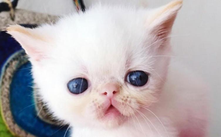 Wir sind die niedlichsten Baby-Katzen
