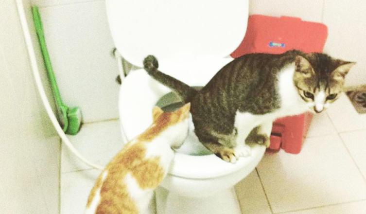 Training ist alles: Diese Katzen wurden von klein auf an eine normale Toilette gewöhnt