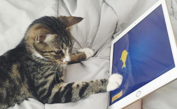 Mäuse fangen ohne Blut? Mit diesen Apps ist es endlich möglich!