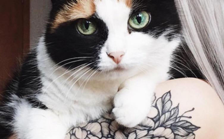Filigrane Katzen-Tattoos sind der neueste Trend