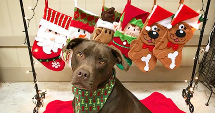 Die schönsten DIY-Adventskalender für Hund und Katz