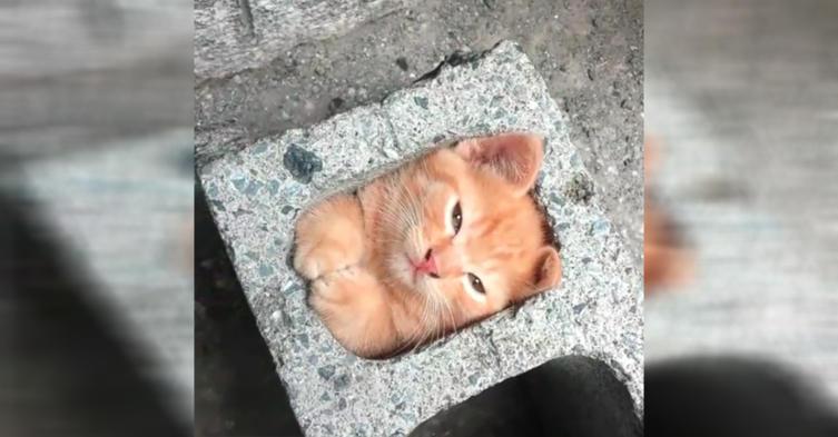 Ja, dieses Kätzchen macht es sich tatsächlich in einem Stein gemütlich