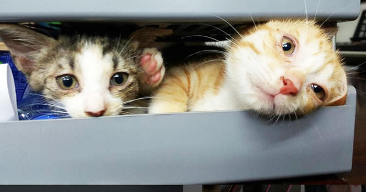 Ganz viele Baby-Katzen in einem Karton und nur ein Ausgang. Wieviele sind es??
