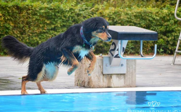 Jetzt dürfen Hunde ins Freibad!
