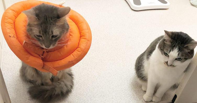 Erste Hilfe leisten – Das können sogar Katzen!