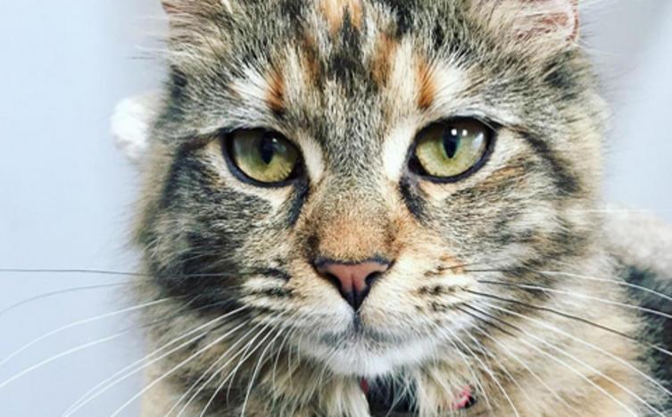 Große Trauer – Die älteste Katze der Welt ist tot!