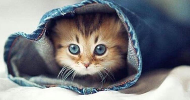 10 träumende Katzen, in die ihr euch sofort verlieben werdet
