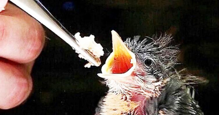 Was tun, wenn man einen kleinen Vogel findet?