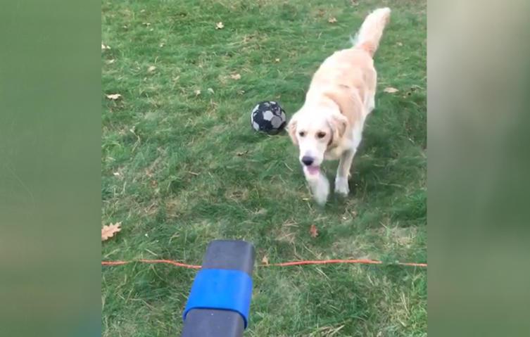 Laubbläser vs. Hund: Wer gewinnt das verrückte Spiel?