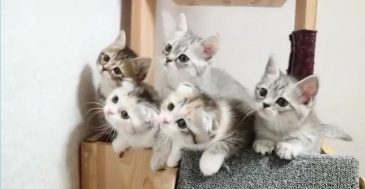 Fünf Babykätzchen beim Synchron-Gucken