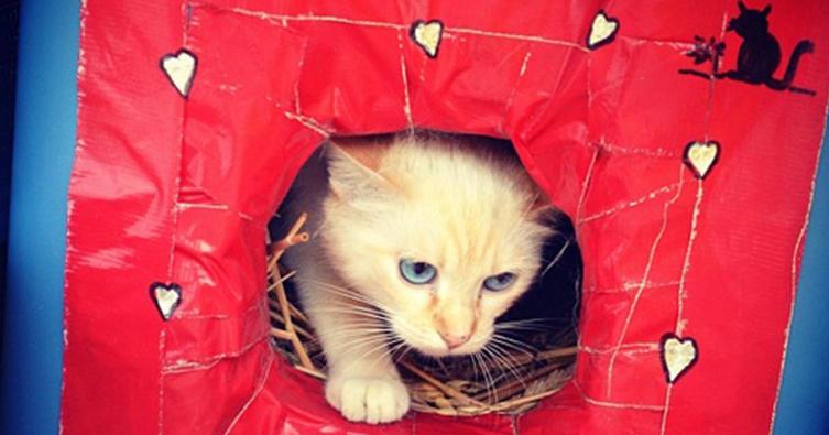 So baut ihr ein Katzenhaus für den Winter