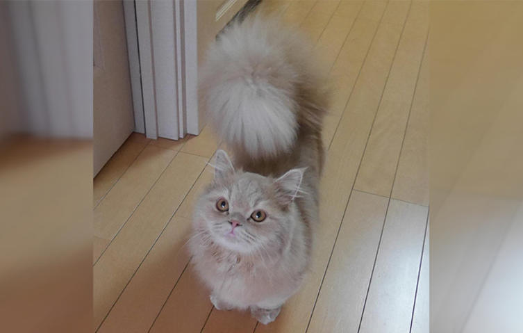 Diese Katze hat einen Eichhörnchen-Schwanz!