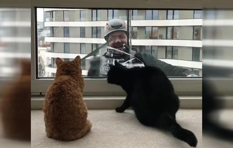 Putzige Begegnung: Katzen vs. Fensterputzer!
