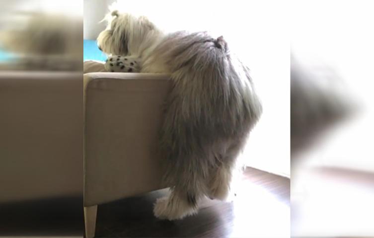 Er ist der ungeschickteste Hund der Welt – und sowas von süß
