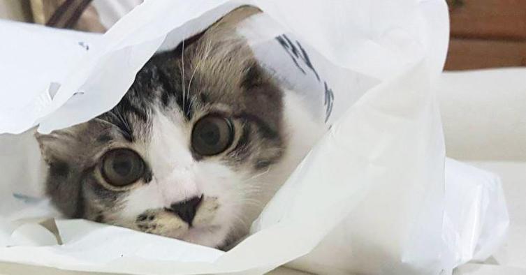Komm in meine Tasche Baby!
