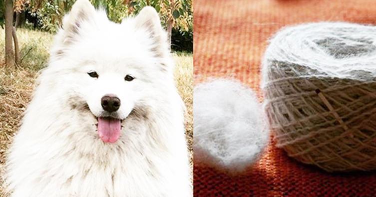 In diesem Winter tragen wir kuschelige Pullover aus Hundewolle!