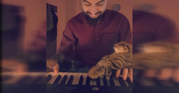 Diese Katze liebt Musik über alles