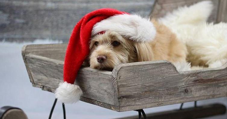 Die 10 schönsten Weihnachtsbilder mit Hund