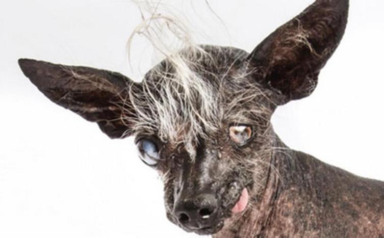 Gewonnen – Ich bin der hässlichste Hund der Welt!