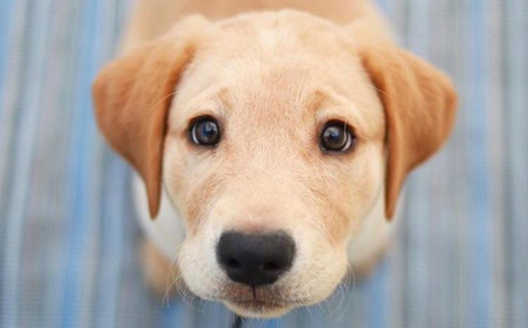 Können sich Hunde schämen? Ja oder Nein?