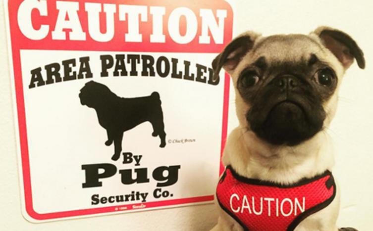 """Das sind die 10 lustigsten """"Warnung vor dem Hund"""" Fotos!"""
