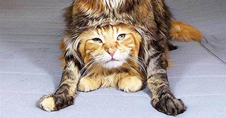 7 Tierisch beliebte Katzenrassen