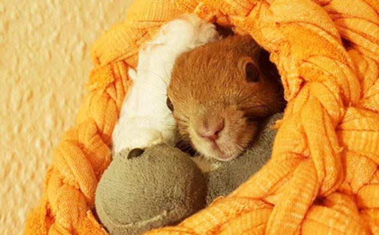 Das ist der süßeste Nestbauer der Welt!