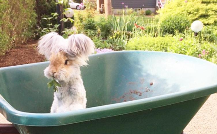 Das ist der Rockstar unter den Kaninchen!