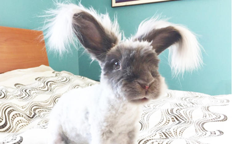 10 Fakten über Kaninchen, die ihr garantiert noch nicht wusstet