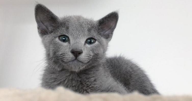Mit dieser Kopfmassage wird eine wilde Baby-Katze sofort ganz ruhig!