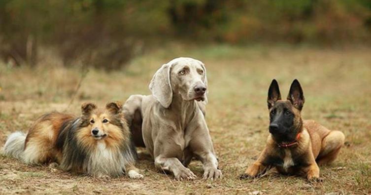 Hundebesitzer leben länger – laut Studie