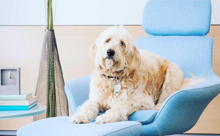 Bessere Laune mit Büro-Hund?