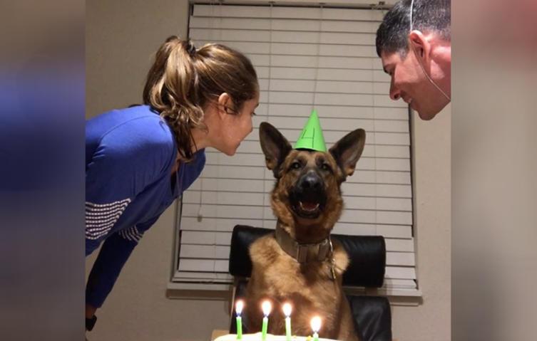 Einen Geburtstagskuchen für den Hund? Dieser Schäferhund liebt es!