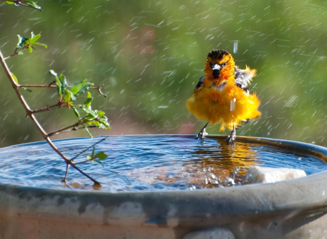 Vogeltränke im Garten: Das müsst ihr beachten