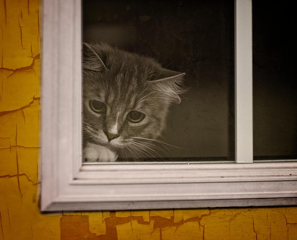 Kippfenster: Die versteckte Gefahr für euren Stubentiger