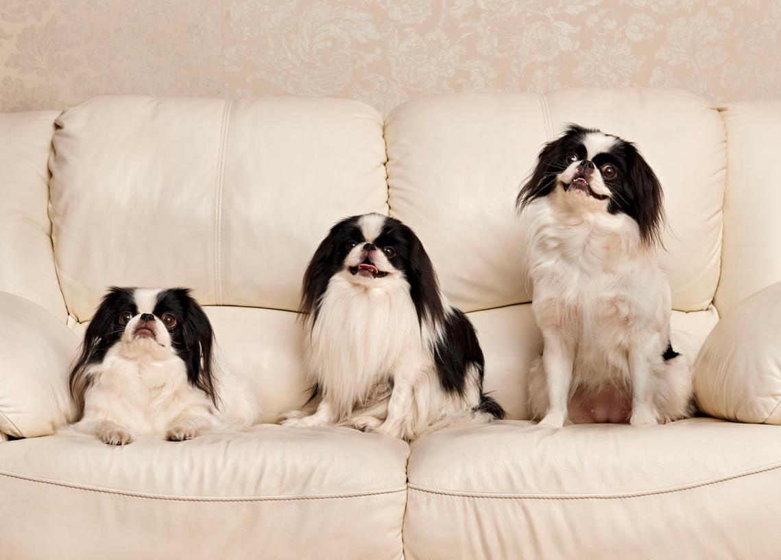 10 Hunde, die zu bequemen Menschen passen