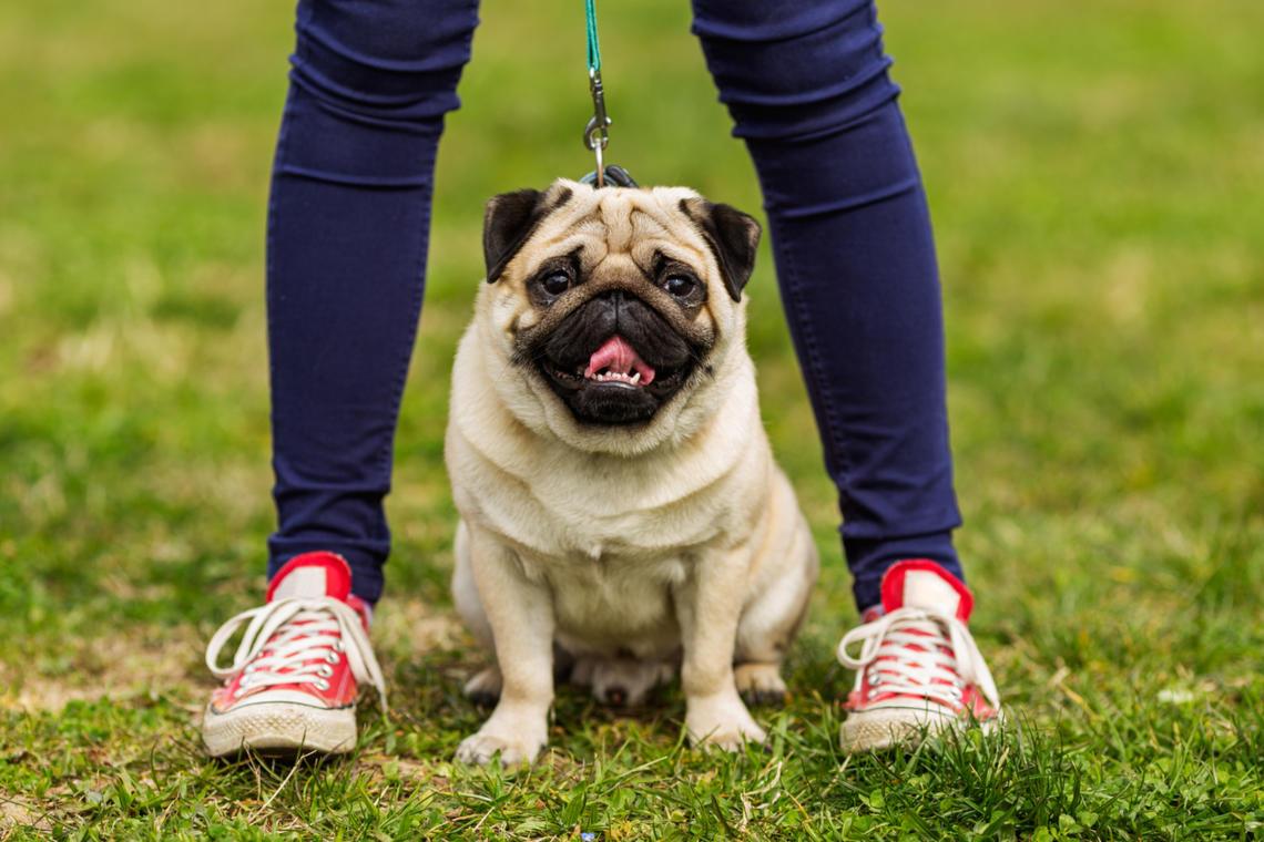 Hunde im Sommer: Das müsst ihr beachten